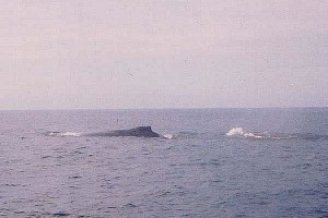 whaleLg