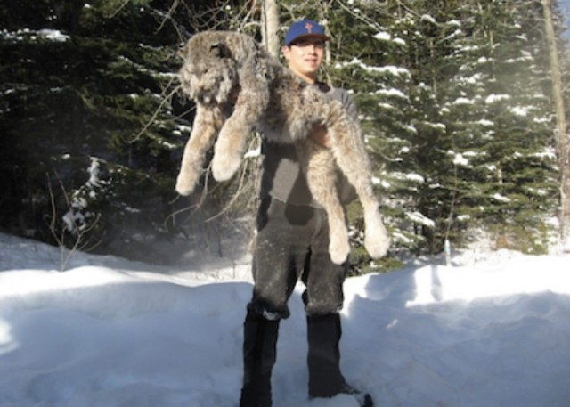 Br. Columbia Wolf, Coyote, Lynx Hunt w/ Trapline Adventures only $4500.
