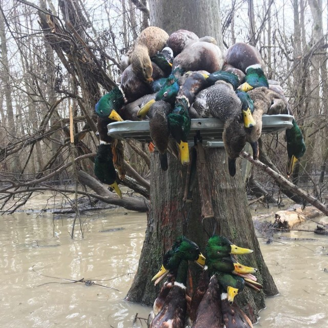 2 Day/Night SE Missouri Guided Duck Hunt with Lodging
